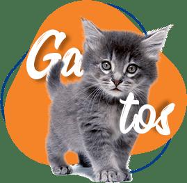 produtos-para-gatos